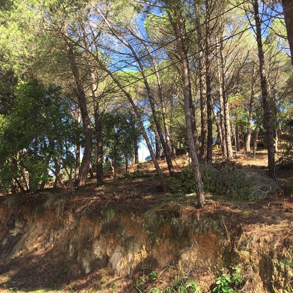 2897 1 Parcela edificable Aguaviva Park