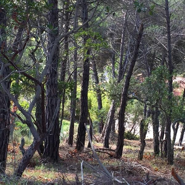 2897 2 Parcela edificable Aguaviva Park