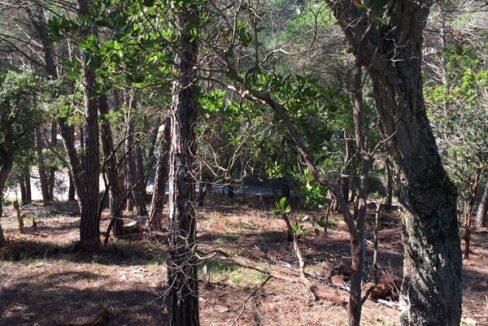 2897 3 Parcela edificable Aguaviva Park