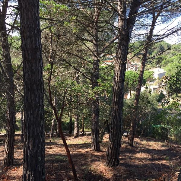 2897 4 Parcela edificable Aguaviva Park